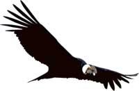 Prey, logo - condor chileno