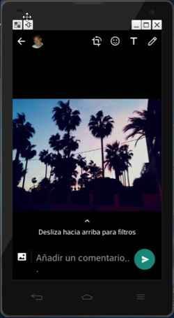 Whatsapp foto de palmeras
