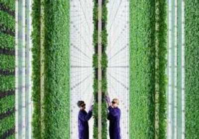 Las granjas verticales controladas por IA prometen una revolución en la producción de alimentos