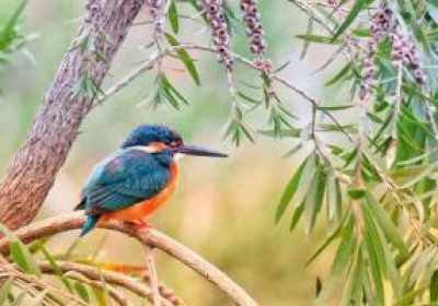Google lanza Wildlife Insights para ayudar a administrar la vida silvestre del mundo